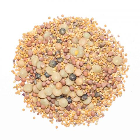spicy sprouting seed mix